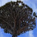 XML ist ein Baum